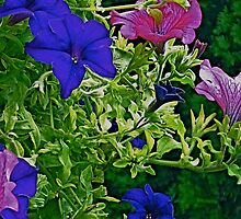 Summer Petunias by Tara Filliater