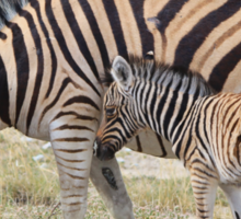 Zebra - African Wildlife - Paired up for Life Sticker
