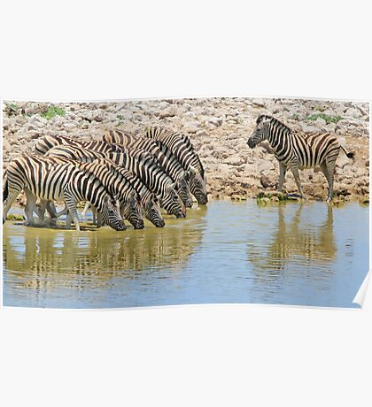 Zebra - African Wildlife - Lined up for Life Poster