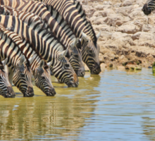 Zebra - African Wildlife - Lined up for Life Sticker