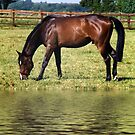Grazing By Water by Squealia