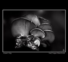 Shelf Fungus Monochrome Poster by Wayne King
