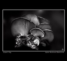 Oyster Mushroom Monochrome Poster by Wayne King