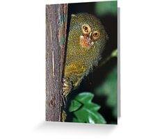 Ahh, there you are! Greeting Card