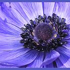 Flower Hearts - Blue/Purple by Kristen Joy Tunney