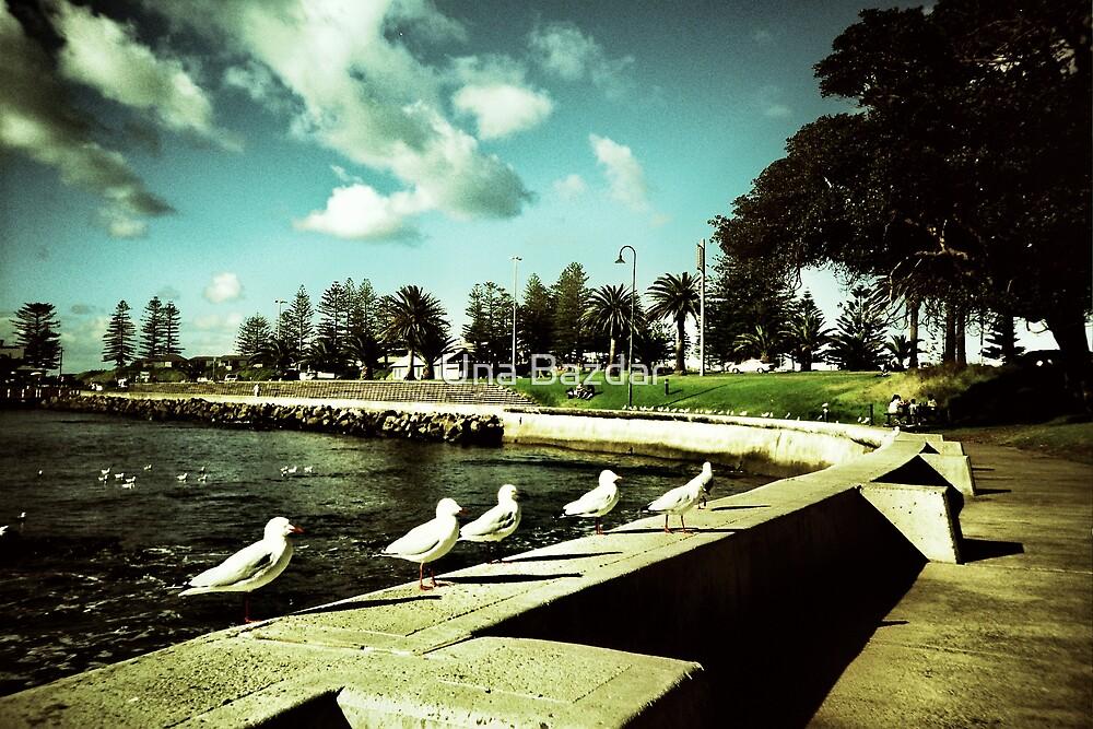 Gulls in a row... by Una Bazdar