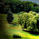 Weeping Willow by jpryce