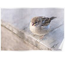 Sparrow - Overweight Poster