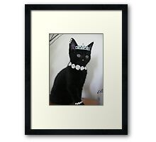 Pimp My Cat ~ ftloccontest1 Framed Print