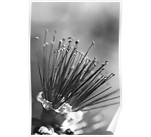Pins & Needles Poster