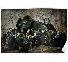 monkey madness Poster