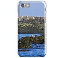 Maine - Seal Kennebunkport Maine iPhone Case/Skin
