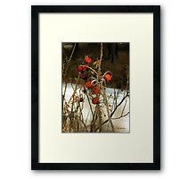 Winter Road – Williamstown Framed Print