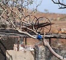 Thirsty Outback by Irma Calabrese