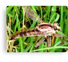 bug eyes.... Canvas Print