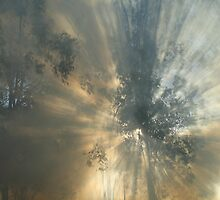 Through The Smoke by Cassie Robinson
