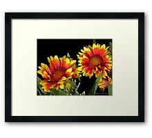 Blanket Flower © Framed Print