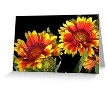 Blanket Flower © Greeting Card