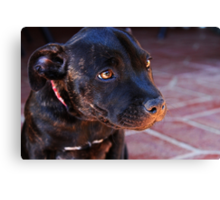 Milly #2 Canvas Print