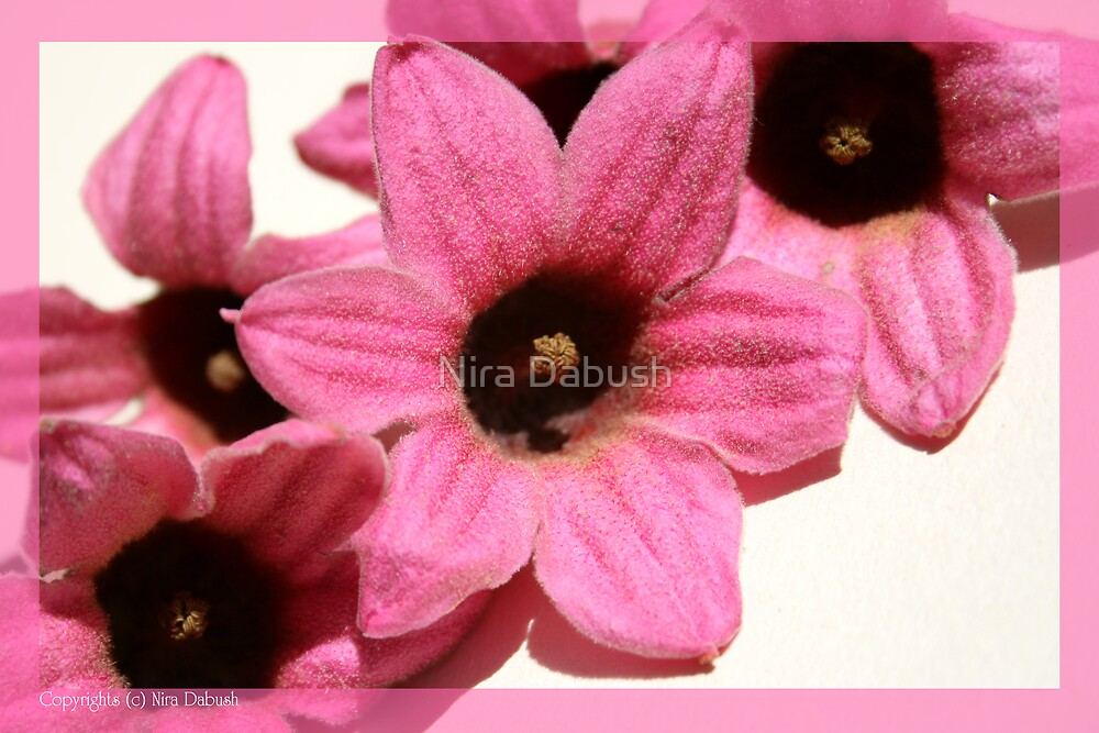 Pinkish Romantic Emotions by Nira Dabush