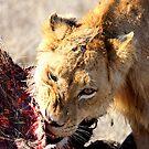 Buffalo feast by Marie Strydom