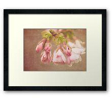 Spring Time - Pink Blossom Textured Framed Print