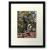 Buddha Torso's Framed Print
