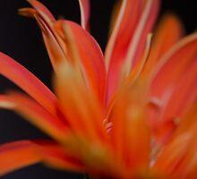 Flower Flames  by Nicole  Markmann Nelson