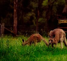 early morning visitors by rozdesign