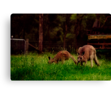 early morning visitors Canvas Print