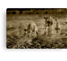 three kangaroos in sepia Canvas Print