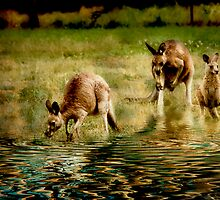 three kangaroos by rozdesign
