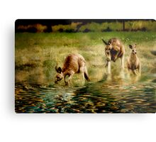 three kangaroos Metal Print