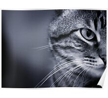 Portrait of cat in black and white Poster