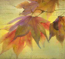 Autumn Wine - Texture by SusieBImages