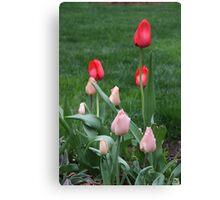 LucKY Tulips Canvas Print