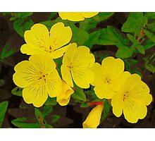Primrose Yellow Photographic Print