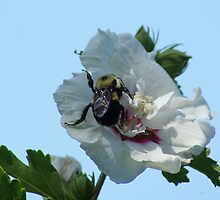 Bumble Bee by Rick  Friedle