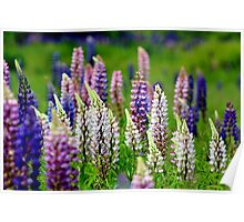 Wild Lupins II Poster