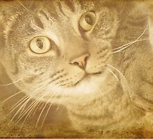 The Dreamer - Textured Cat by SusieBImages