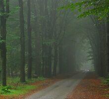 Exploring misty laneland again by jchanders