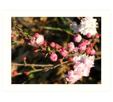 Buds of Pink Art Print