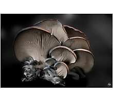 Painted Fungus Photographic Print
