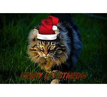 HAVE YOURSELF A FURRY LITTLE CHRISTMAS Photographic Print