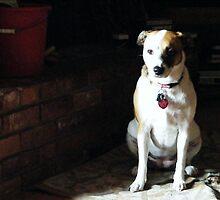 Beagle Baby by greeneyedlady