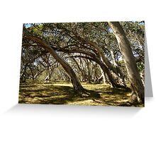 Wind Swept Snowgums,Victorian High Country Greeting Card