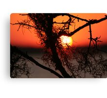 Spanish Moss at Sunset Canvas Print