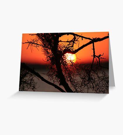 Spanish Moss at Sunset Greeting Card