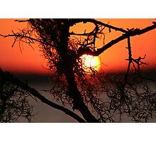 Spanish Moss at Sunset Photographic Print