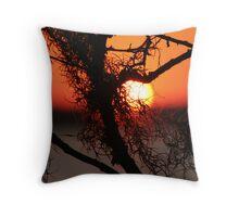 Spanish Moss at Sunset Throw Pillow